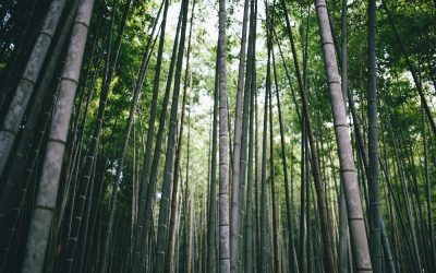 The Benefits of Bamboo Bedding