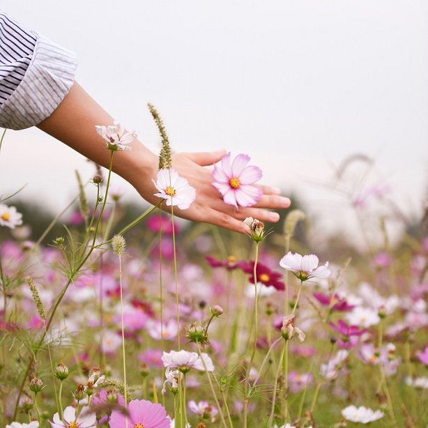 All you need to know about Hay Fever