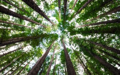 How Is Hypnos Eco-Friendly?