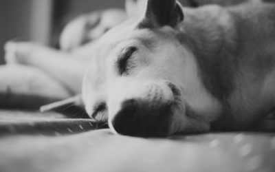 Does Sleeping with Your Pet Affect Your Health?